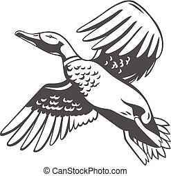 duck., vettore, isolato, illustrazione, white.