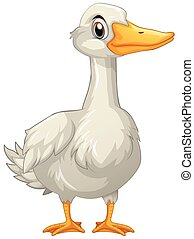 Duck with white feather
