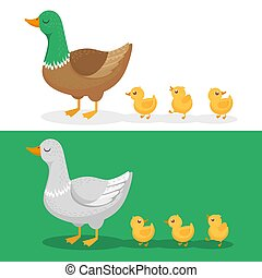 Ducklings and mother duck. Ducks family, duckling following mom and walking mallard baby chicks group cartoon vector illustration