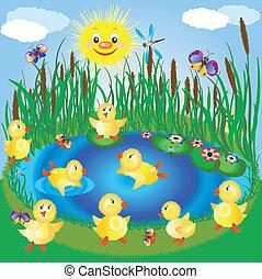 ducklings, renda