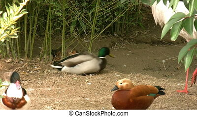 Ducks and birds resting near the pond