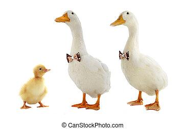ducks - Ducks with a bowtie white background