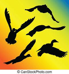 Ducks flying silhouette