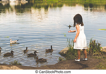 Ducks gather at the pond to get food from a little girl in a white dress
