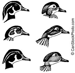 Duck's heads - Some of duck's heads on white background
