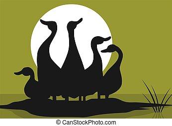 Ducks - Illustration of wild ducks