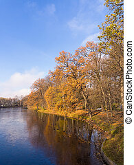 ducks in the autumn park