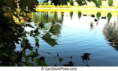 ducks in the park lake