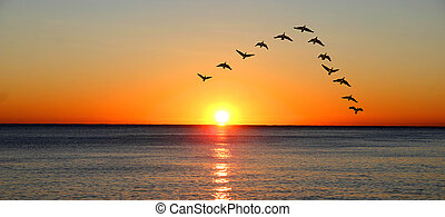 Ducks migrating during sunset over the ocean