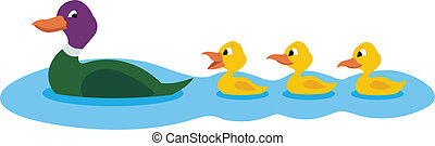 Ducks - Mother duck swimming with her three little...
