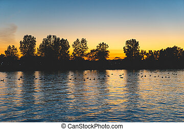 Ducks on a pond at sunset
