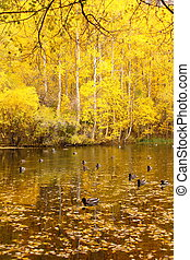 Ducks on a Pond in Autumn