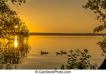Ducks on a small lake at sunrise