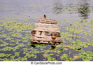 Ducks on a wooden pier on pond. Sleeping duck on the old wooden bridge with sea view