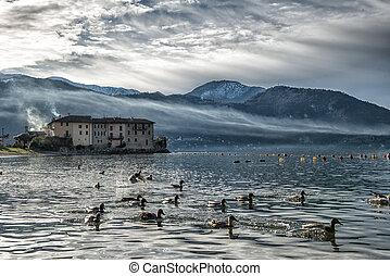 Ducks on Lake Como Italy