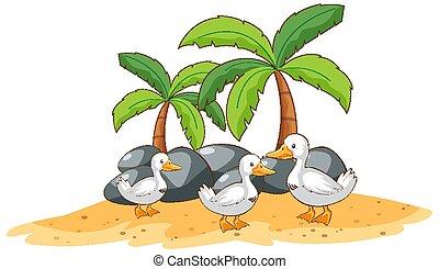 Ducks on white background