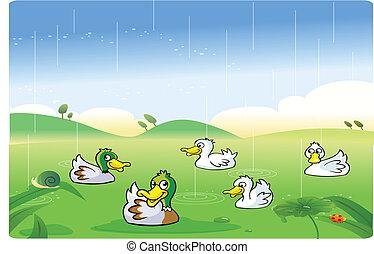 Ducks playing in the rain