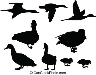 Ducks silhouette collection - vector