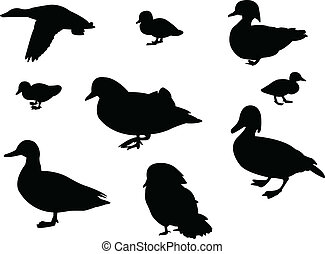 Ducks silhouette - vector illustration