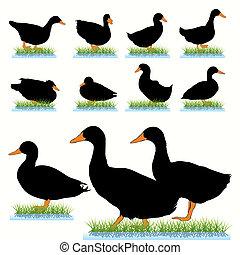 Ducks Silhouettes Set
