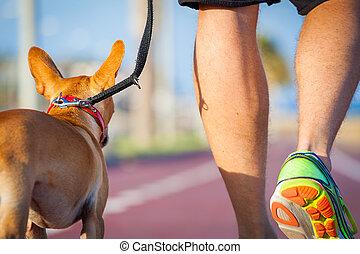 dueño, perro caminante