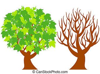due, albero