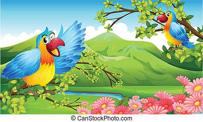 due, colorito, pappagalli, in, uno, paesaggio montagna