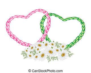 due, corda, cuore, con, uno, margherita bianca, fiore