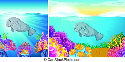 due, manatee, scena, mare, sotto, nuoto