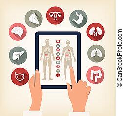 due mani, toccante, schermo, di, uno, tavoletta, con, umano, organo, icons., vector.