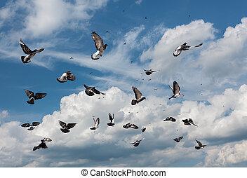 duer, flyve
