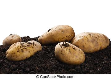 dug potatoes on the ground on a white