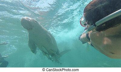 dugong., de, kerel, maakt, selfie, met, dugong., rood, sea., marsa, alam.