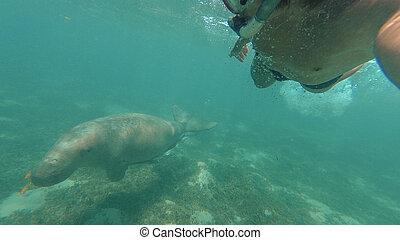 dugong., il, tipo, marche, selfie, con, dugong., rosso, sea., marsa, alam.