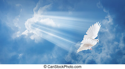 duif, in de lucht, met, vleugels, wijd open