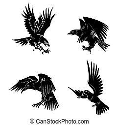 duif, raaf, adelaar