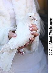 duif, trouwfeest