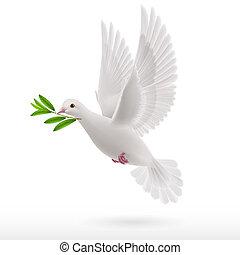 duif, vlieg