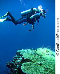 duiker, in, diep
