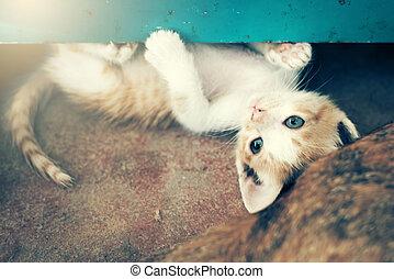 dulce, ablandar, enfoque., momento, floor.in, gatito