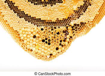 dulce, aislado, panales, miel, blanco
