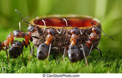 dulce, alimentación, jarabe, hormigas
