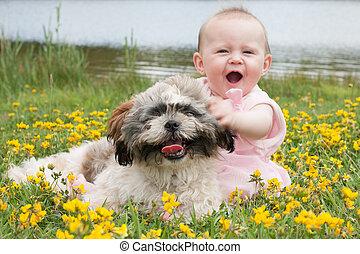 dulce, campo, nena, perrito, ranúnculos