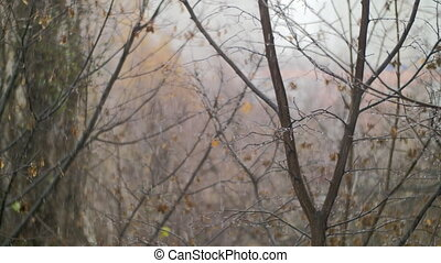 Dull autumn scene of bare trees and snow with rain - Bare...