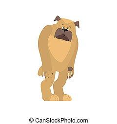 dull., chouchou, chien, sad., bouledogue, vecteur, illustration, affligé, emotions.