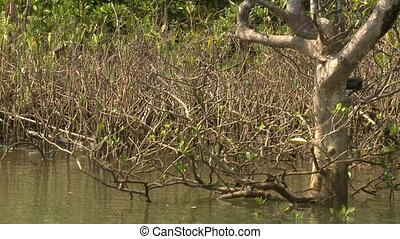 Dull mangrove twigs along Kangy River, Myanmar - Close-up...