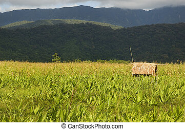 Dumagat Hut in the middle of Palanan's grassland in Isabela, Philippines