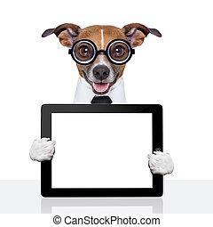 dumb business dog
