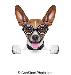 dumb crazy dog - crazy silly dog with funny glasses behind...