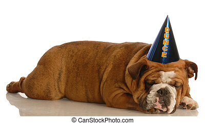 dumb dog - english bulldog stretched out sleeping wearing...